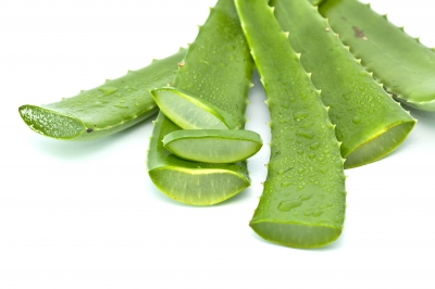 Topical Benefits of Aloe Vera