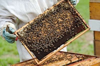 Bees make more than honey! Get the health benefits of Manuka honey, bee pollen, propolis, and royal jelly.